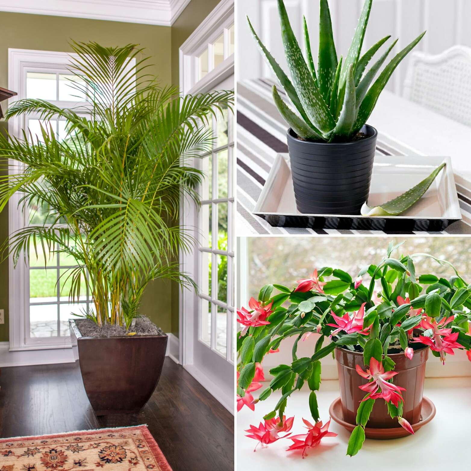Simple Home Decor: Healthy Home: Simple Home Décor Solutions With Health Benefits